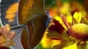 Валс на цветята от Чайковски