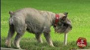 Шега с Кучетата в Парка- Скрита Камера