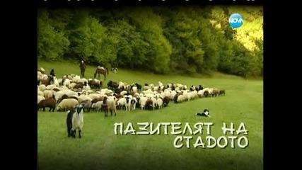 Българското овчарско куче духът на Българския балкан
