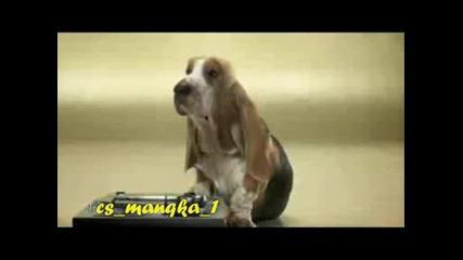 Куче Бийтбоксър