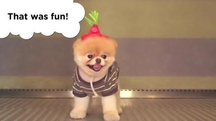 Най - сладкото пухкаво кученце което някога сте виждали ..