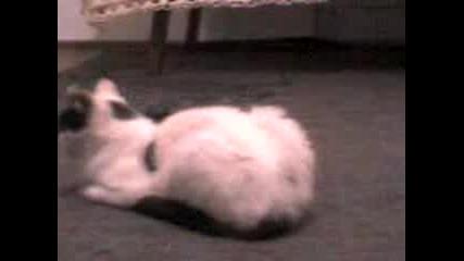 Котка Се Къпе