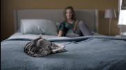 Котка обяснява приятелството на малко коте