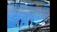 Oceanografic-spectaculo con Delfines