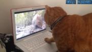 Ненормални животни правят изцепки! - Яки гафове