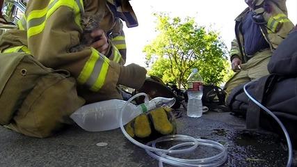 Пожарникари спасяват коте.