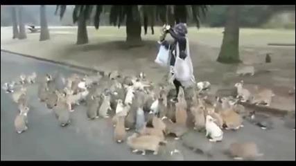 Зайчета атакуват момиче