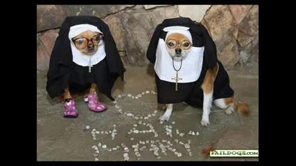 Ето че и кучетата имат чувство за хумор