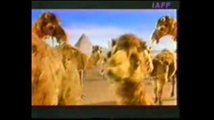 Камилата Пакостник - Смях