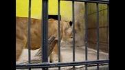 Зоологическата градина в Ловеч