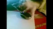 Моята Котка :)