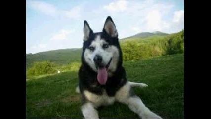 породи кучета Part 3