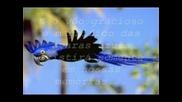 Амазонка Умира - Скорпионс Човечество
