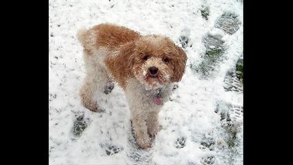 Шаро и първия сняг