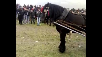 Тудорица в Видин кон Раму