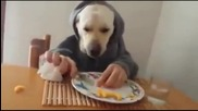 Dog Having Lunch - Epic Win