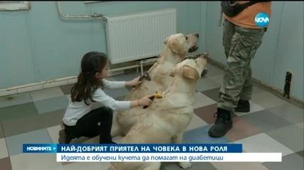 Обучават кучета да помагат на диабетици