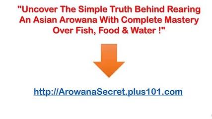 Arowana Care Guide, Arowana Fish Arowana Aquarium, Arowana Fish Feng Shui, Arowana Diet