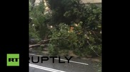 Hong Kong: Gigantic tree falls in central Hong Kong