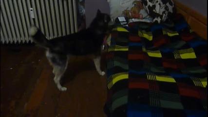 Видео - (2014-12-07 09:19:46)