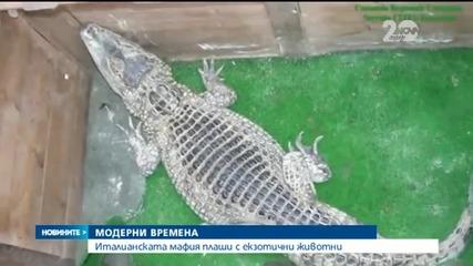 Италианската мафия сплашвала с тигри, алигатори и влечуги