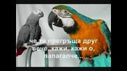 [превод] Lefteris Pantazis - O, papagalos
