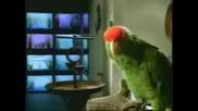 Говорещи Папагали - Wazzaaa / Бъд