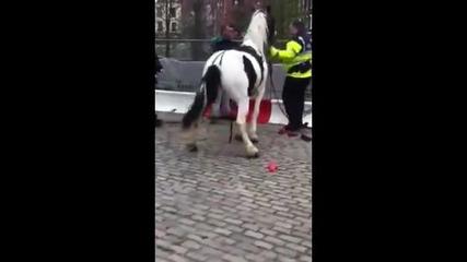 Разгонен Кон налазва полицай
