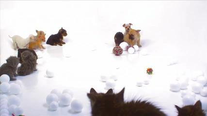 Много сладки котенца и кученца