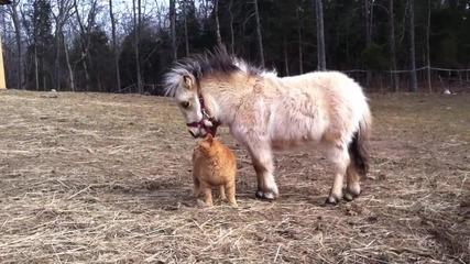 Котка и Пони са приятели