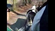 Gypsy Vanner-Horses