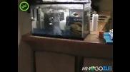 Idiot si vzrivi akvariuma s piratka