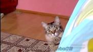 Коте гледа лошо =_=