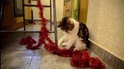 Funny Cats prepares for Christmas