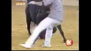 Това добиче е доста лудичко напада човек и го саблича гол смях !