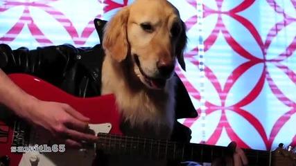 Джинджер-най-умното куче,куче като човек,куче в човешко тяло