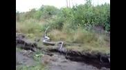 Голяма Змия в Амазонска река