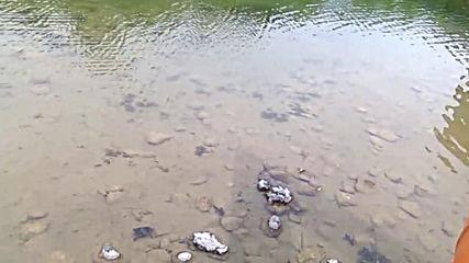 Костенурки и ръкавици в езерото в Бизнес парка