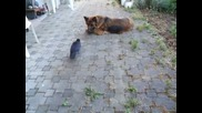 Куче и Врана си играят с топче