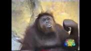 Маймуна Прави Маймунджолъци