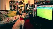 Куче гледа световното по футбол и се радва на гола на Португалия!