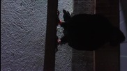 palamarski mlado pile selahattinkocaeli