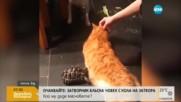 Сумо среща между костенурка и котка