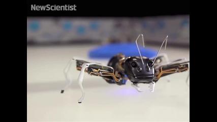 Бионични мравки ще са утрешните работници във фабрики