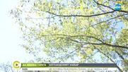 """""""Да хванеш гората"""": Шотландският хлебар"""
