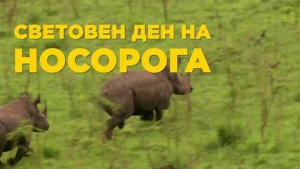 Световен ден на носорога - 22ри септември