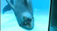 Минутка: 5 интересни факта за делфините
