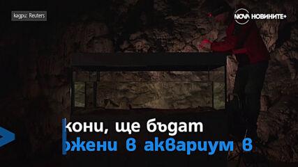 Туристите се завръщат във Венеция и Бебета дракони могат да бъдат видени в словенска пещера