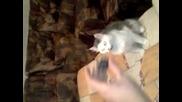 Котка обучена като Куче