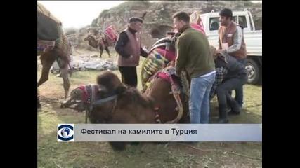 Фестивал на камилите в Турция